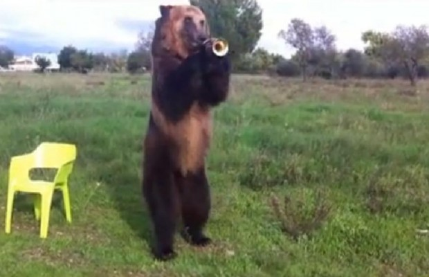 Yes, it's a bear playing the trumpet and dancing