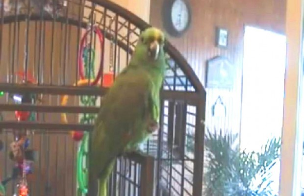Celebrate the 4th Of July (with a parrot?)