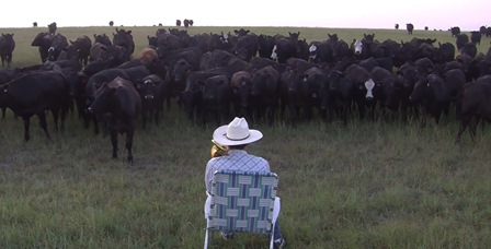 We've all heard of cat calls; what about cattle calls?