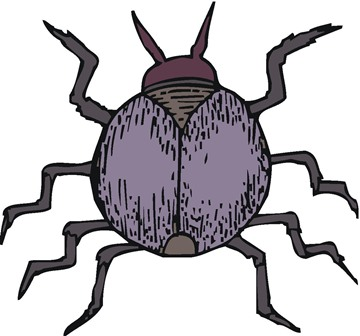 Watch out Mainers… there's a new tick in town!